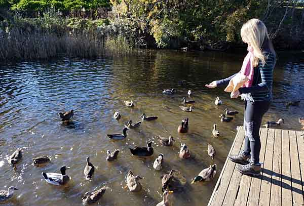 Нельзя давать птицам испорченную еду