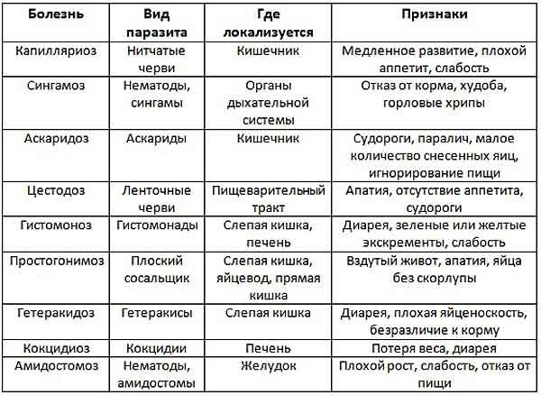 Названия глистов, места, где они локализуются, вызываемые ими болезни и симптомы