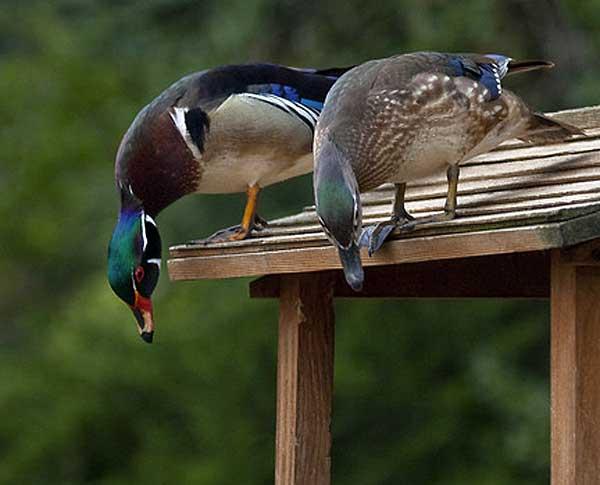 Для гнездования нужно место
