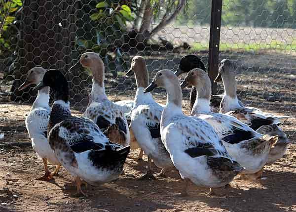 Башкирские птицы