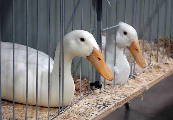 Содержать птиц надо в подходящих условиях
