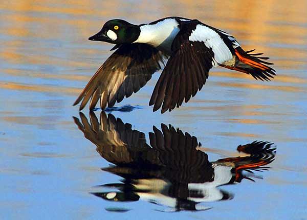 Агрессивные птицы