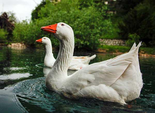 Гармонично слаженные птицы