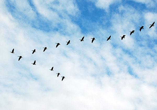 Птичий клин