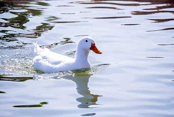 Любят купаться