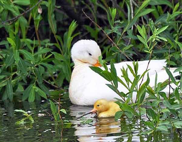 Мама учит малышей плавать