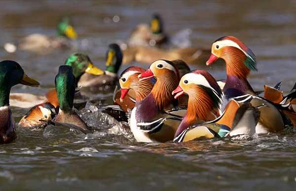 С птицами связано много легенд