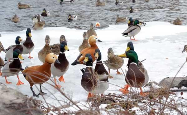 Птицы нуждаются в помощи