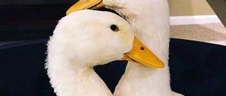 Бизнес по выращиванию птиц рентабелен