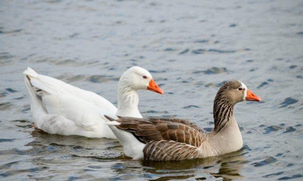 Птицы могут быть двух цветов