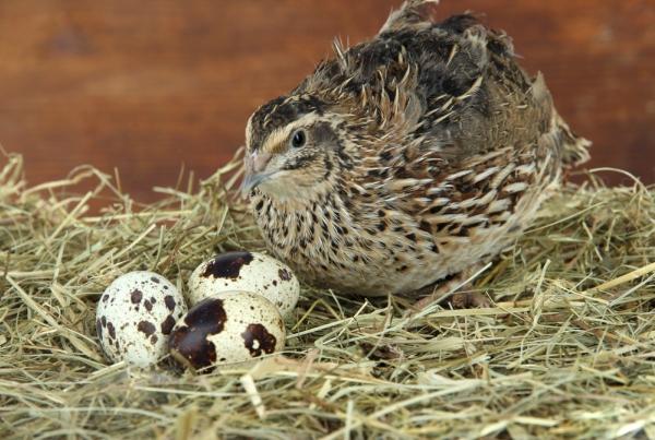 С возрастом самки яйца теряют в качестве