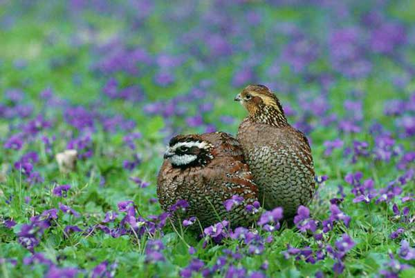 Развитие с/х вытесняет птиц из природы