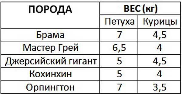 Таблица веса распространенных пород кур