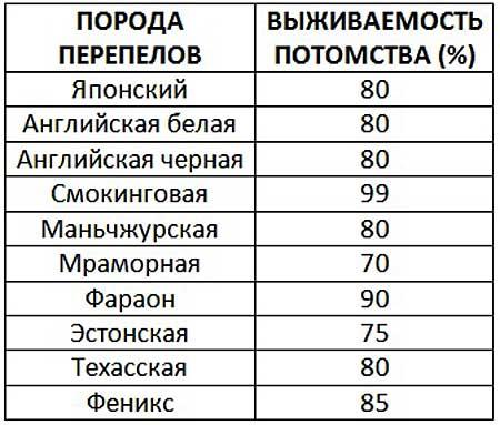 Таблица процентного соотношения выживаемости перепелят распространенных пород