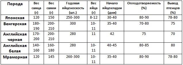 Сравнение яичных видов птиц