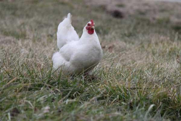 За здоровьем птиц нужно спешить