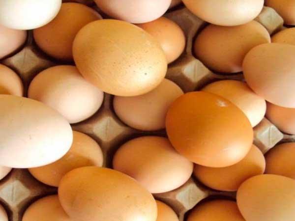 Яйца для инкубации должны быть без изъянов