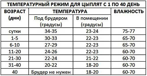 Таблица температурного режима в брудере и помещении