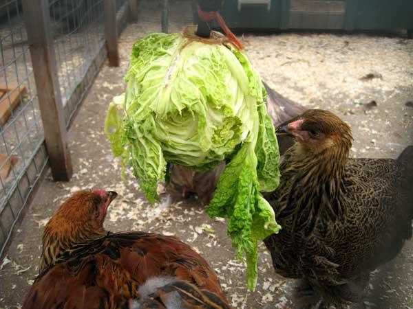 В рационе должны быть овощи