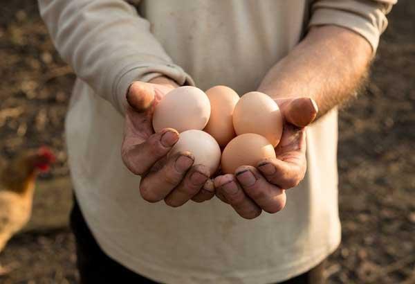 Много яиц в руках