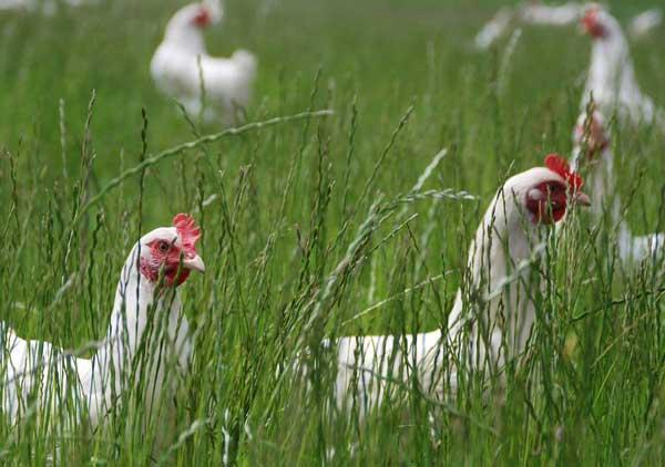 Спрятались в траве