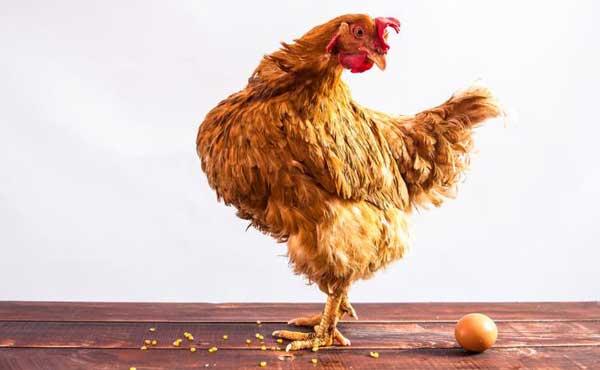 Смотрит на яйцо