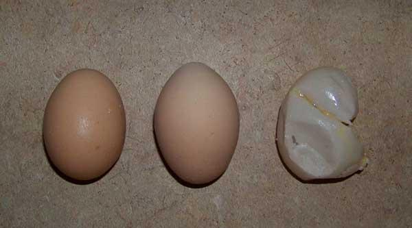 Неправильно сформированное яйцо