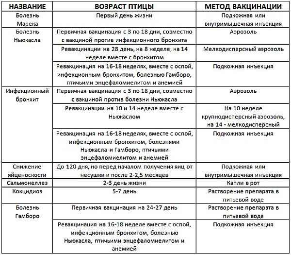 Таблица вакцинации цыплят