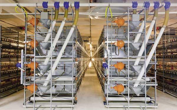 Клетки для фермы