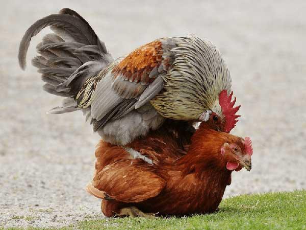 У птиц любовь