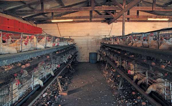 Антисанитария убьет птиц