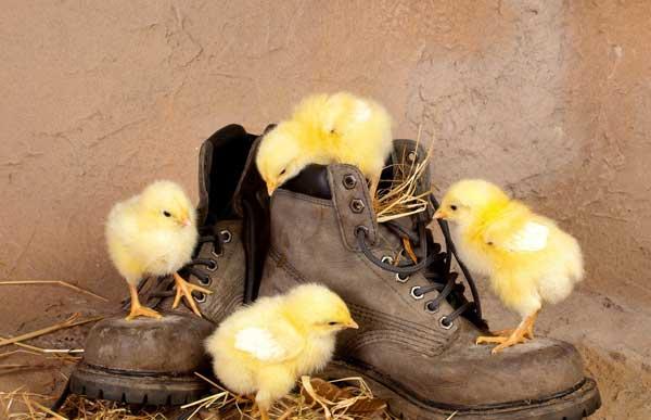 Лазают по ботинкам