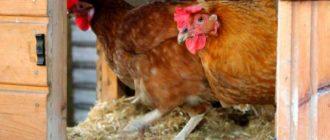 Сырость плохо влияет на здоровье птиц